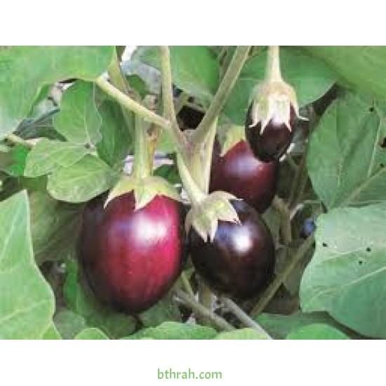 بذور الباذنجان - Solanum melongena