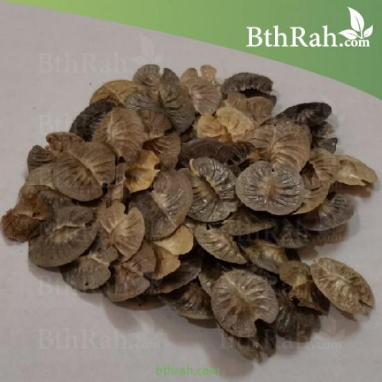 بذور عشبة الخزامى - horwoodia dicksoniae turrill