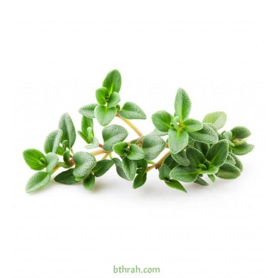 بذور عشبة الزعتر - Thymus vulgaris