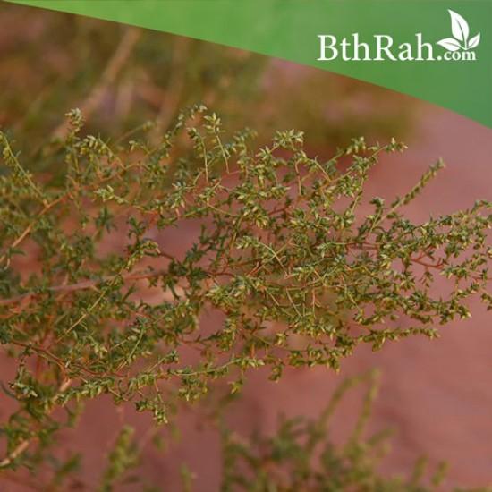 بذور شجرة العاذر - Artemisia monosperma