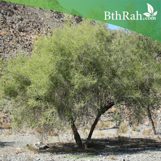 بذور شجرة السرح - Maerua crassifolia