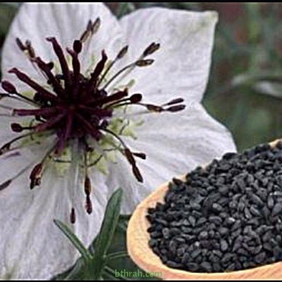 بذور الحبة السوداء-حبة البركة-NIGELLA SATIVA