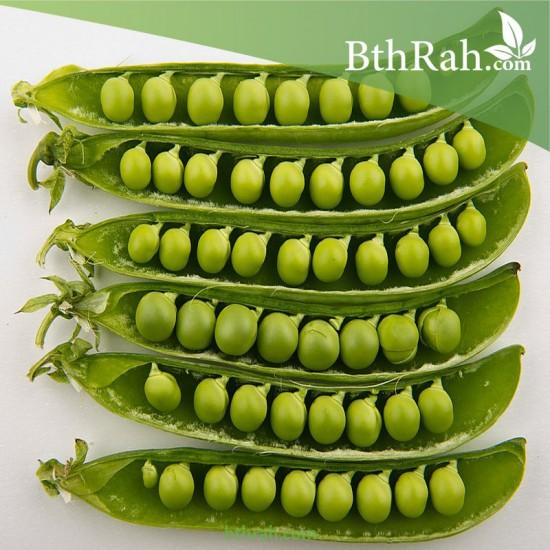 بذور البازلاء-البسلة-Pea