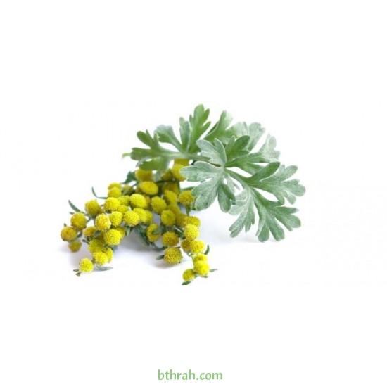 بذور عشبة الشيح - Artemisia Seiberi