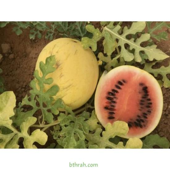 بذور بطيخ  (Citrullus lanatus)
