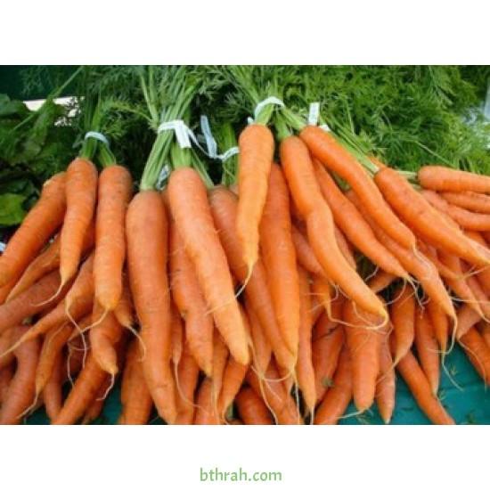 بذور الجزر - Daucus carota