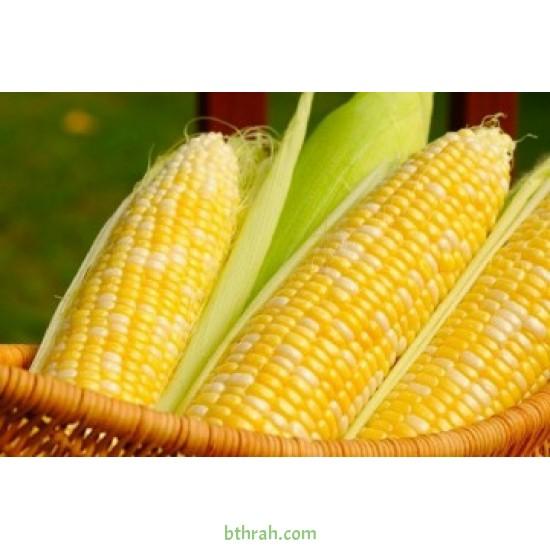 بذور الذرة الجيزانية - Zea mays