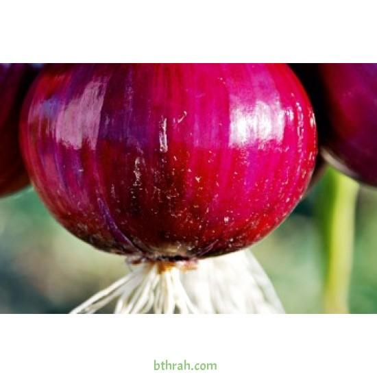 بذور بصل احمر (Allium cepa)