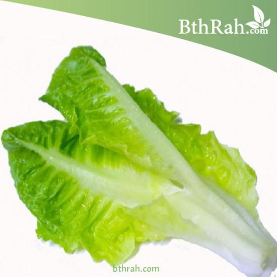 بذور الخس - Lactuca sativa