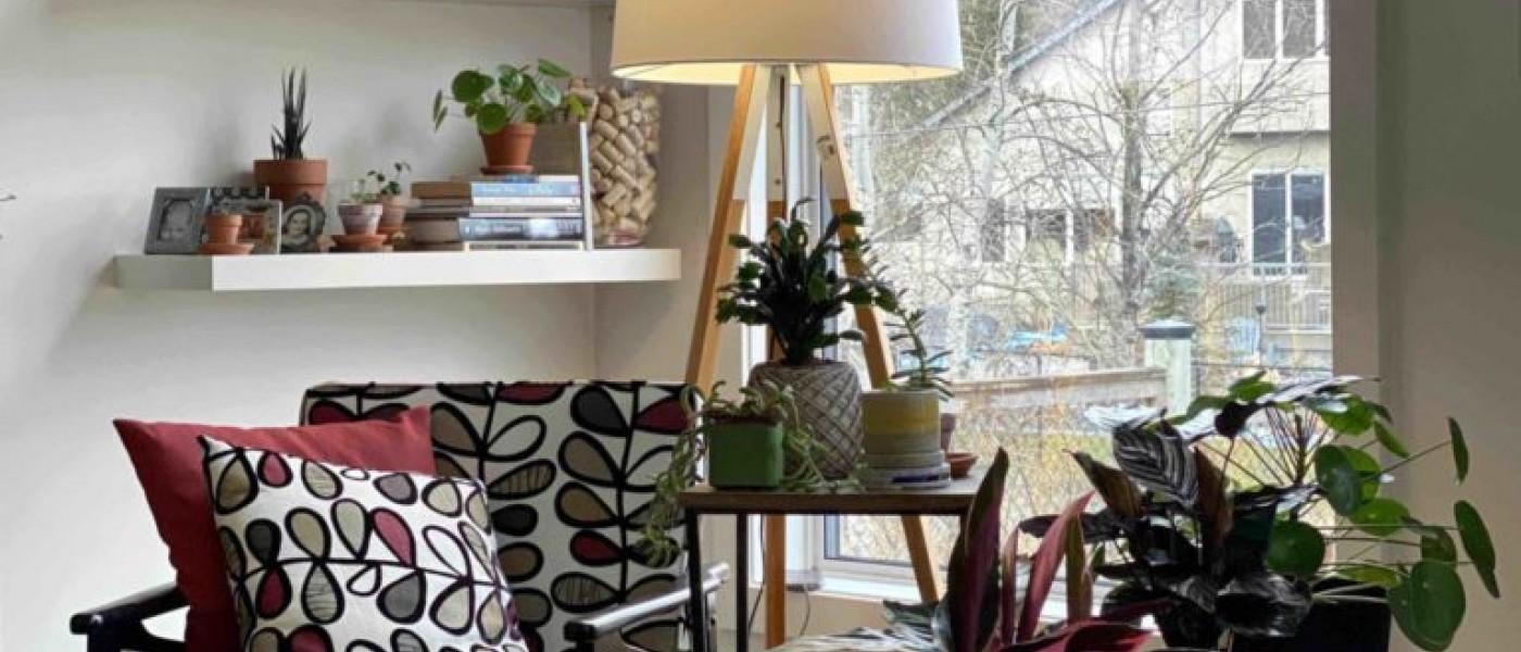 أفكار فريدة لتزيين النباتات لمنزلك