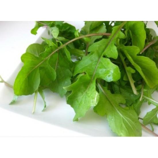 بذور الجرجير - Eruca vesicaria ssp. sativa