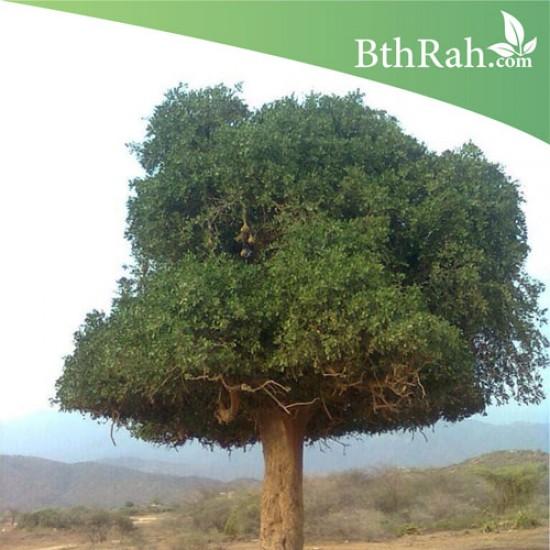 بذور شجرة الضبر - Dobera Arabica