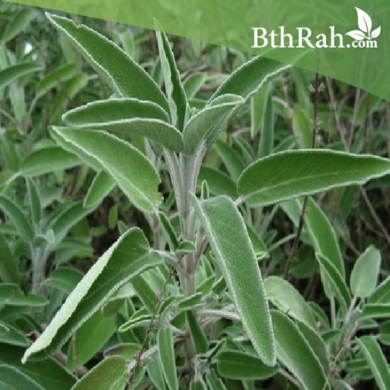 بذور عشبة المرامية (مريميّة) ( Salvia officinalis)