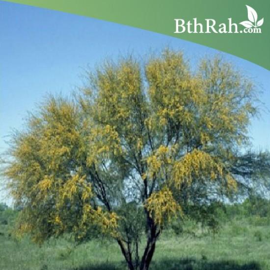 بذور شجرة طلح الفتنة - acacia farnesiana