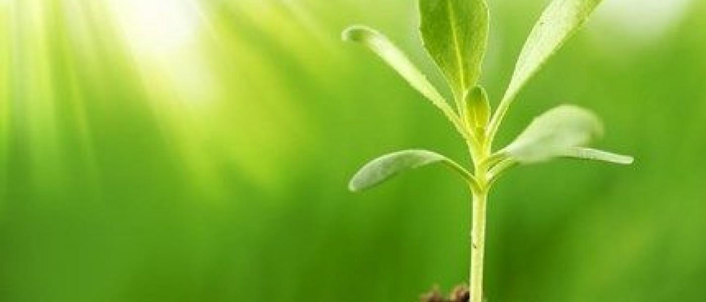 تقسيم النباتات تبعاً لعمرها الفسيولوجي